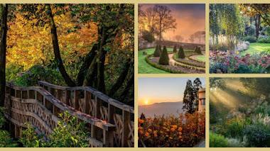 Jardines para soñar. Fotos premiadas en IGPOTY N.10 Beautiful Gardens