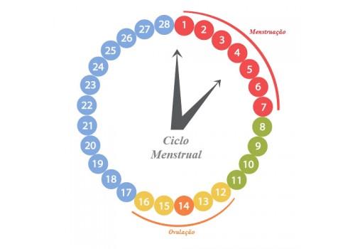 Por que o ciclo menstrual das mulheres se alinha?