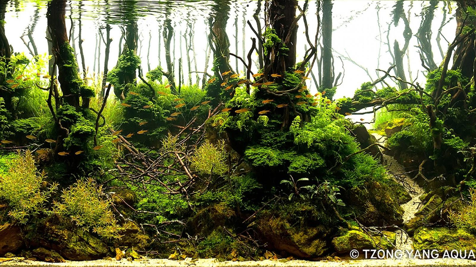 Cây thủy sinh dương xỉ lá me trong 1 bể tại IIAC 2016
