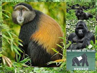4 Days  Volcanoes safaris gorilla trekking to Parc Nationale Des Volcanoes and Mt. Visoke Hike