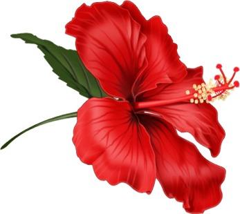 Imagenes Flores Rojas Para Imprimir Imagenes Y Dibujos Para Imprimir
