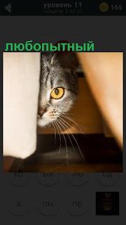 любопытная кошка выглядывает из под стола одним глазом