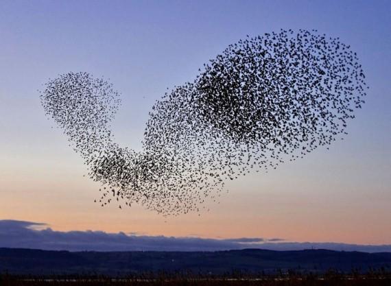 Misteri Bunuh Diri Masal Burung Jalak