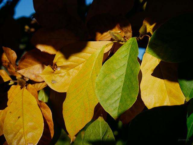 Colori delle foglie in autunno
