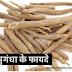 How Do Ashwagandha And Shatavari Herbs Help In Weight Gain