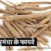 How Do Ashwagandha And Shatavari Herbs Help In Weight Gain