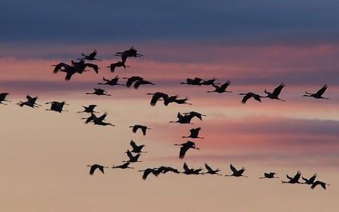 Majdnem 800 madár pusztult el egy év alatt áramütéstől