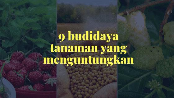 Budidaya Tanaman Yang Menjanjikan