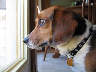 Tratamiento Por Ansiedad y Separación De Su Perro