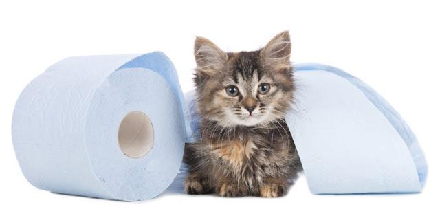 Cat Diarrhea Home Remedy