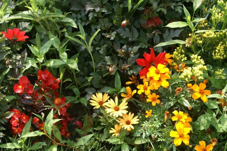 A green and rosie life le jardin des plantes jardin botanique in caen normandy - Le jardin des plantes caen ...