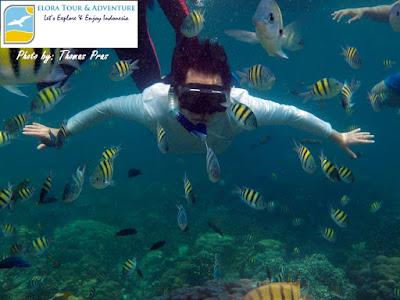 wisatawan mancanegara terpesona keindahan bawah laut pahawang