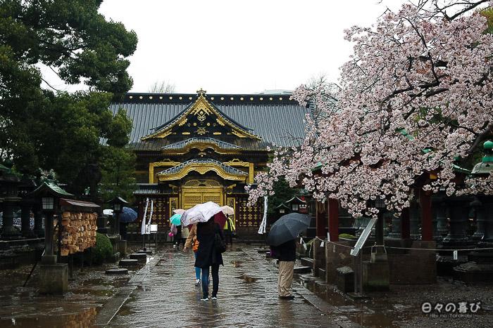 allée du sanctuaire toshogu sous la pluie pendant le hanami