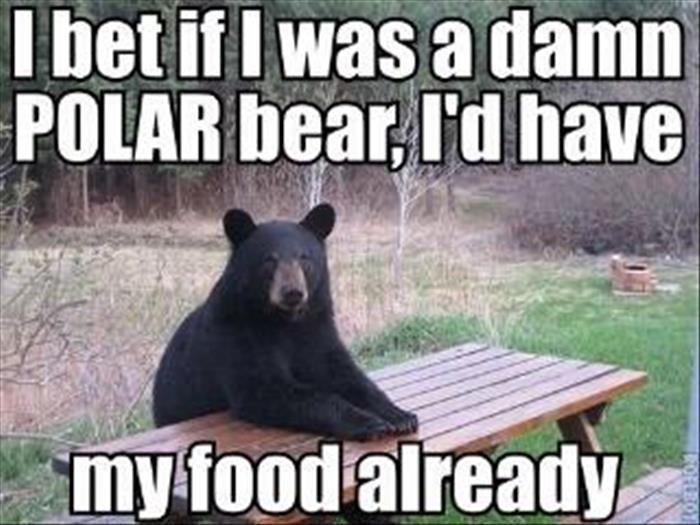 Funny Animal Memes (6)