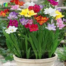 كيف نحافظ على الورد  الورود الأزهار مدة أطول how to keep flowers freshly for long duration