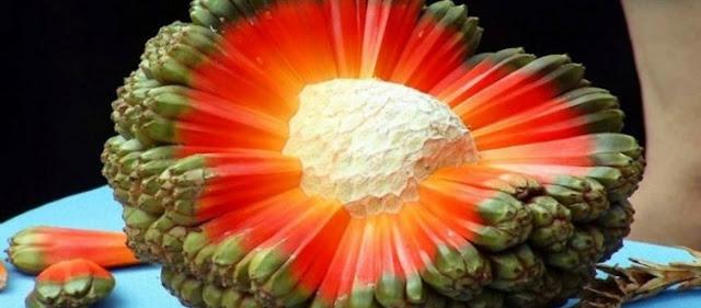 Τα 20 Πιο Σπάνια Εξωτικά Φρούτα Που Υπάρχουν Στη Γη!- Το Τελευταίο Τα «Σπάει»...