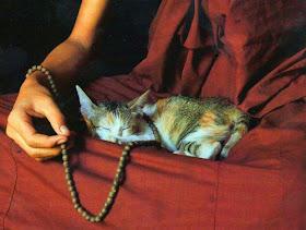 Una curiosa leyenda Budista sobre los gatos