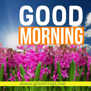 Morning-Greetings-Live-Picture-Message-Flowers