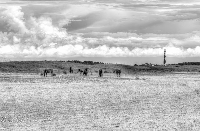 Wild Horses at Shackelford Banks, Cape Lookout Lighthouse