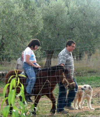 los olivares ,camino ,pantano de Pena, Beceite, Beseit, yegua, Tomás, papa, Diana