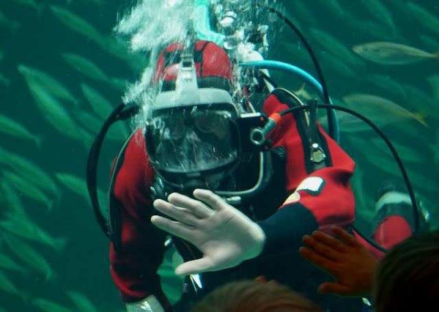 Hirtshals: 5 lohnenswerte Ausflugsziele. Ein Ausflug ins Nordsee-Ozeanarium Hirtshals, dem größten Aquarium Nord-Europas, lohnt sich auf jeden Fall, besonders mit Kindern!