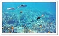 Buceo-Nusa-Penida-Indonesia