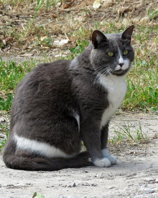 Cat in a parking lot, Via delle Grazie, Livorno