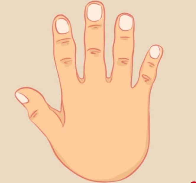 shape of your hands reveals secrets about you