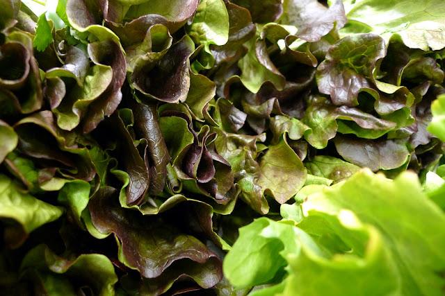 Cara menanam sayuran selada air yang benar