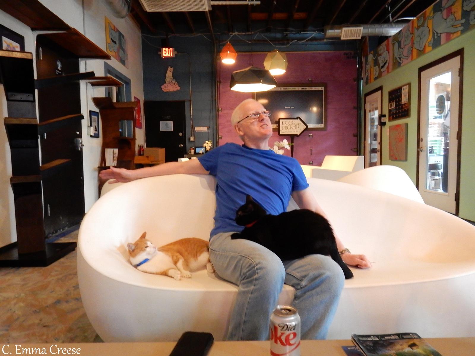 Blue Cat Cafe And Wine Bar Burlington Vt