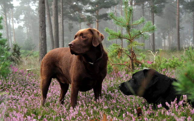 Twee honden in het bos