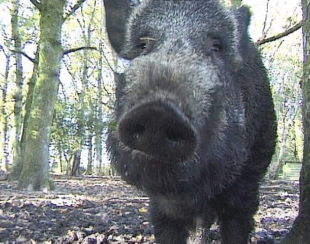 amper bae wild animals in britain
