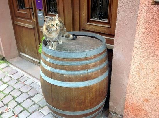 cat on barrel