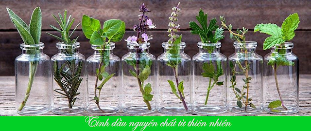 Tinh dầu nguyên chất từ thiên nhiên