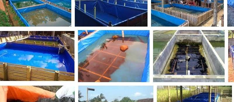 Kunci Sukse Pembenihan Ikan Lele di Kolam Terpal