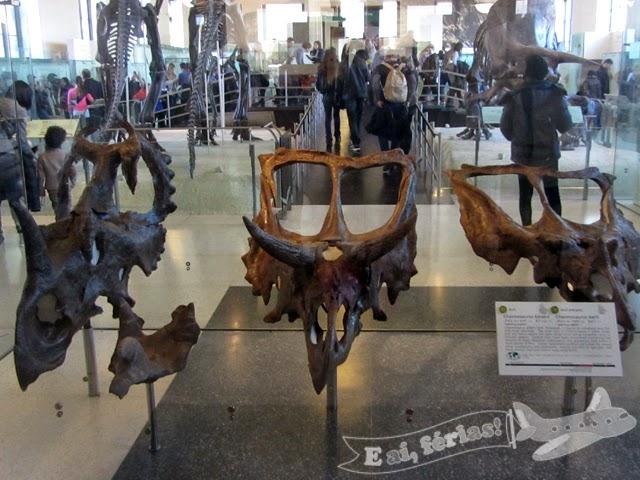 Museu de Histório Natural de Nova Iorque