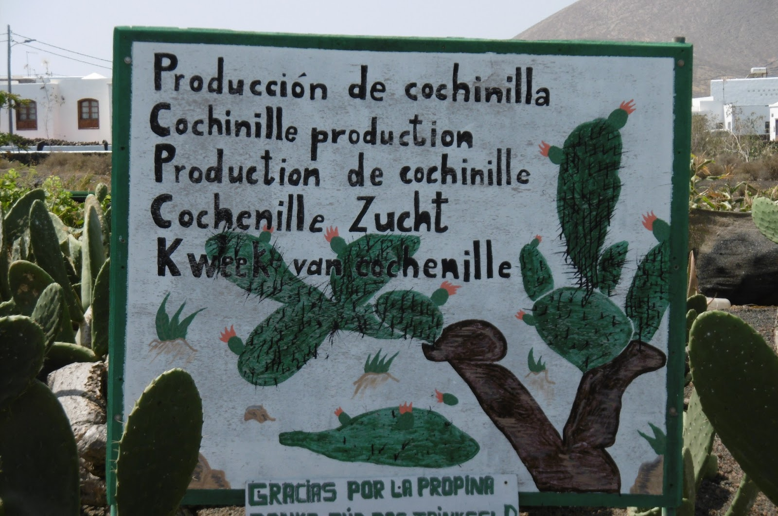 Lanzarote Diaries Jardin De Cactus Madhouse Family Reviews