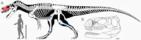 http://sciencythoughts.blogspot.co.uk/2014/03/a-new-species-of-theropod-dinosaur-from.html