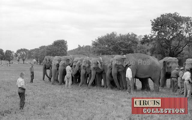 9 éléphants du plus grand cirque du monde