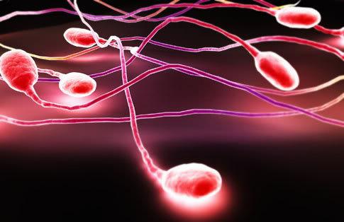 Gambar Penyebab Dan Cara Mengatasi Sperma Berdarah