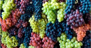 8 Benefits of Grapes for Health