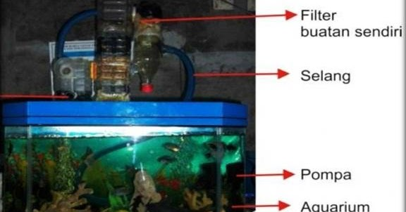 Tips Membuat Filter Aquarium Jernih