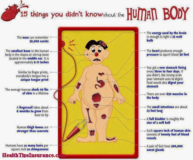 15 things you didn't know about the human body