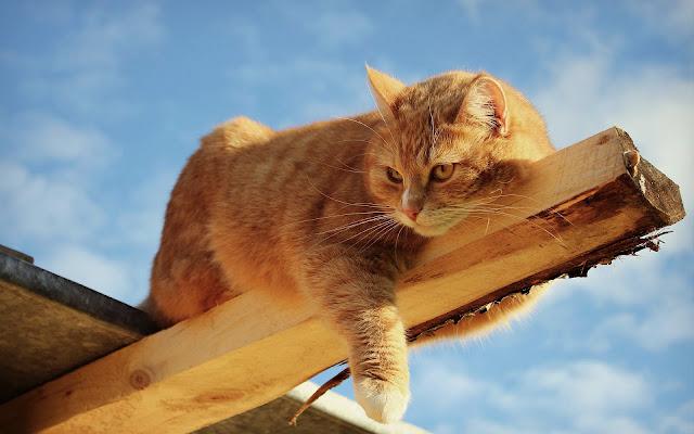 Kat doet gevaarlijk