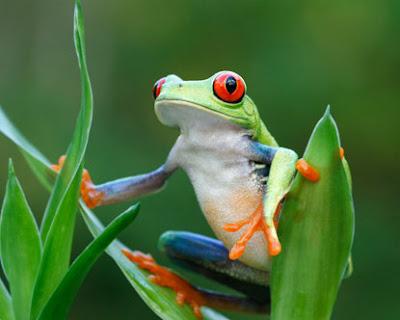 Simpatica imagen de rana colorida
