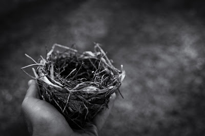 Photo of nest  by Jerry Kiesewetter on Unsplash