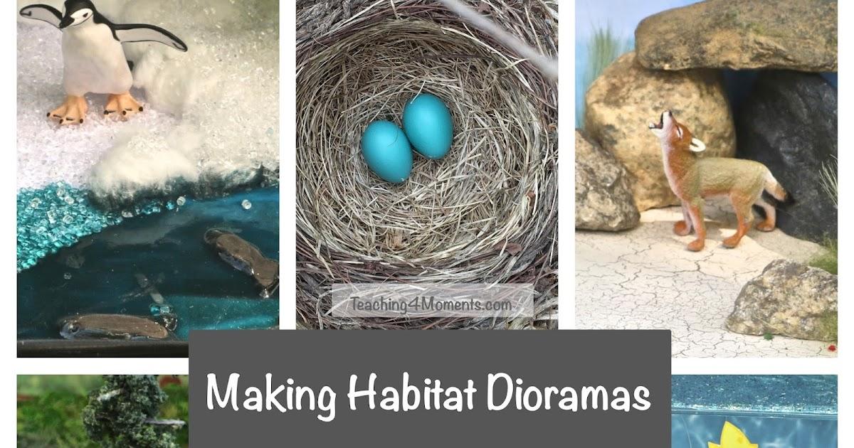 Teaching4Moments: Making Habitat Dioramas