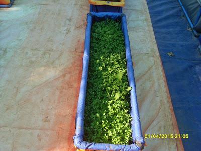 Thagavalthalam Organic Farming வீட்டு தோட்டம்