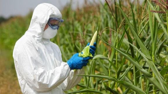 Monsanto asume su derrota y se comienza a retirar de Europa