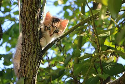 manfaat ari ari kucing menurut hindu